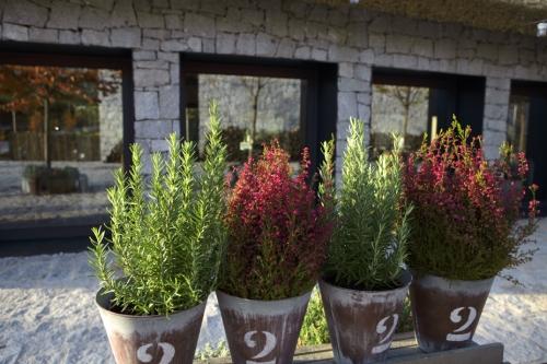 Restaurantes beautiful life magazine - Plantas aromaticas exterior ...