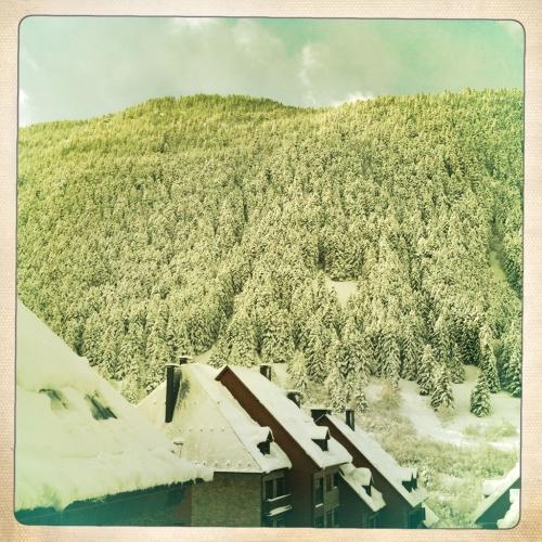 Arboles nevados en Baqueira