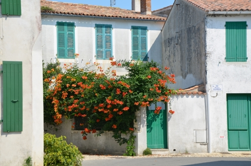 Casa con flores en Sainte-Marie-de-Ré