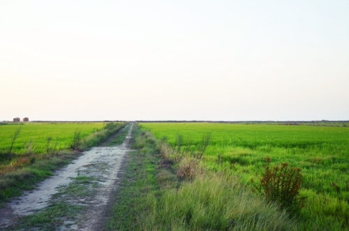 Cabanas no Rio Comporta camino arrozal