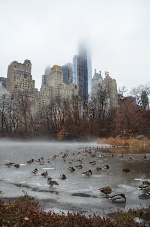 Patos en lago helado Central Park Nueva York 1600